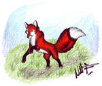 For the Fox