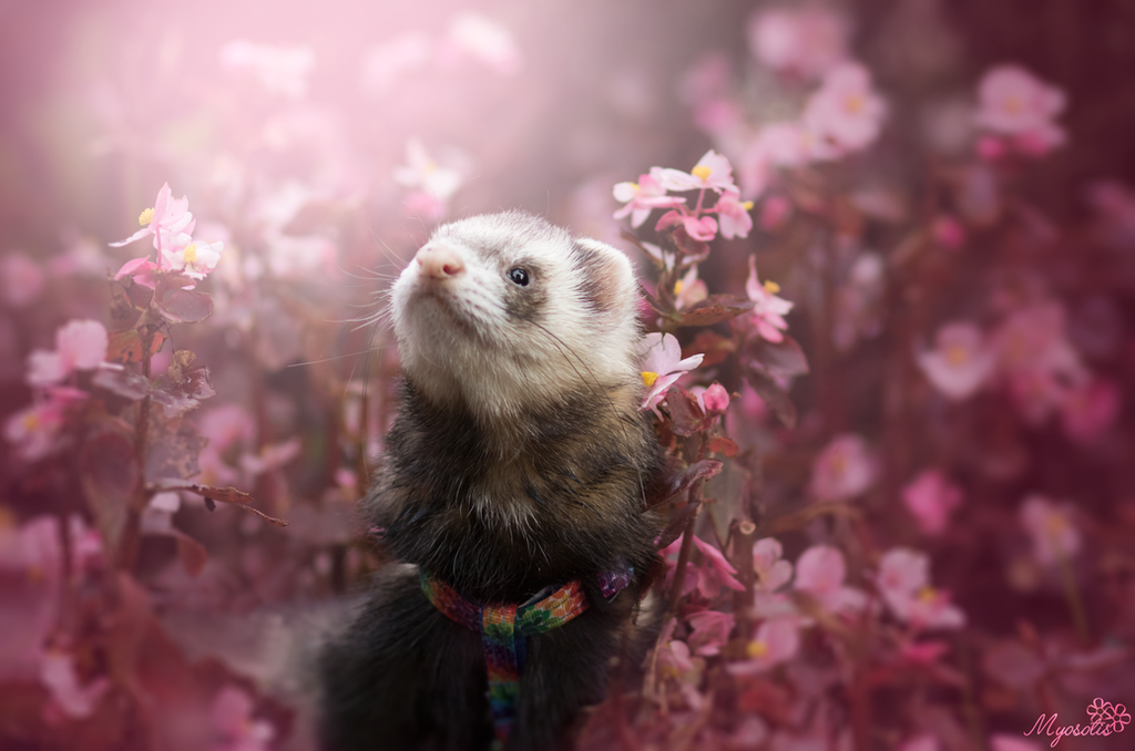 I love flowers by MyosotisPhoto