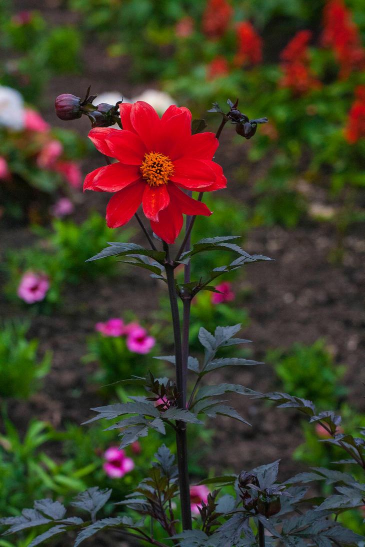 flower V by davidst123