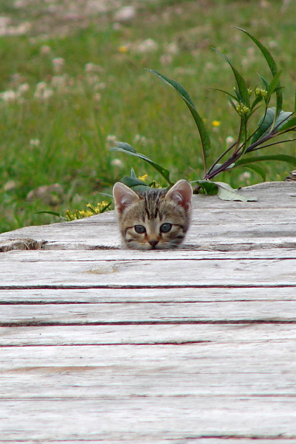 hiding place by Mokepoke