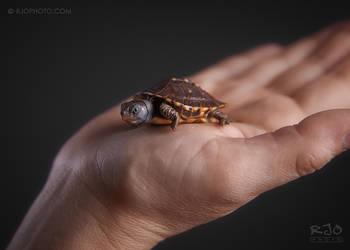 Tiny by rekit