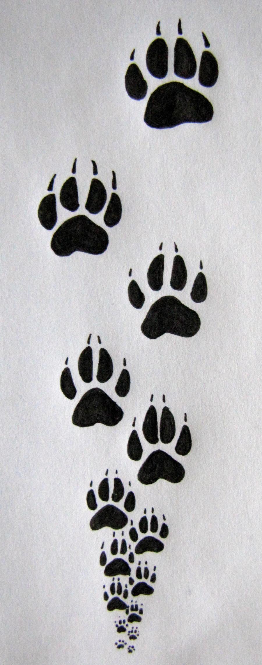 Steps Drawing Paw Prints By Acinonyxrex