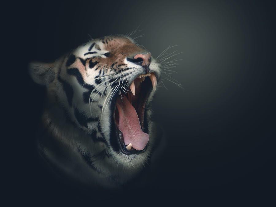 Tigers wallpaper tumblr