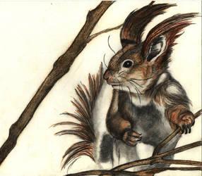 squirrel by katyo9