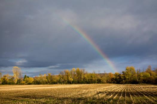 Cornfield Rainbow