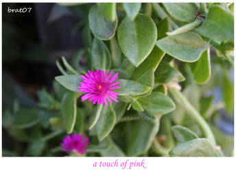 a touch of pink
