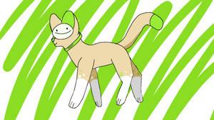 Dream the cat