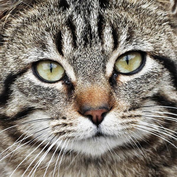 Cat02 by tryskell