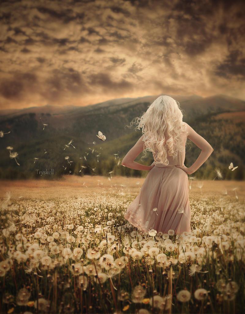 Dandelion by tryskell