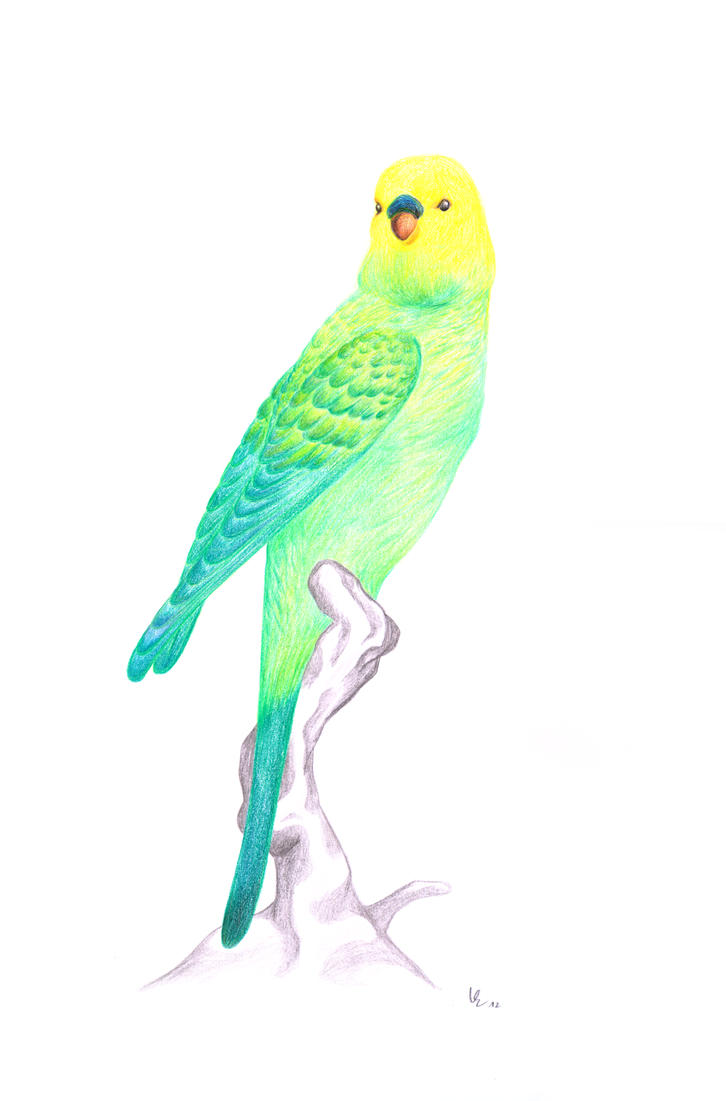 Green Canary Green Canary by...