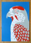 Postcard Hawk 2