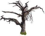 Dry Tree png