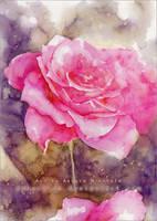 Rose - Watercolor by RoryonaRainbow