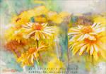 Golden days - Watercolors