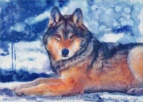 Winter's calm by RoryonaRainbow