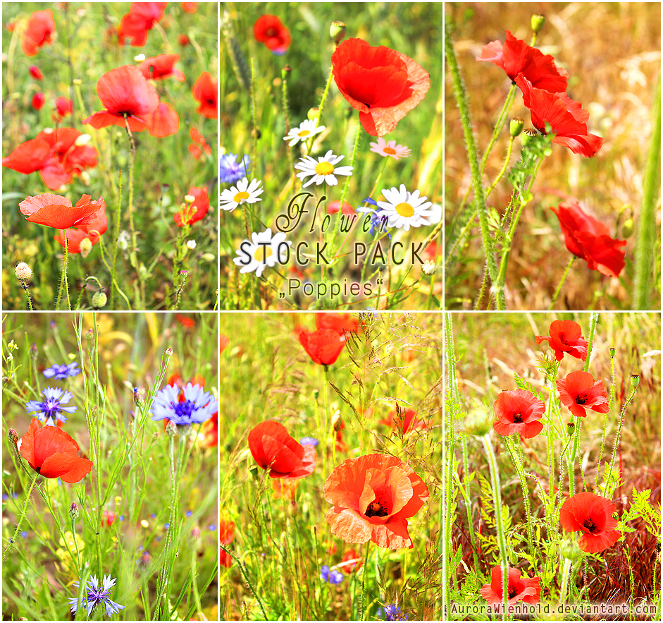 Poppies - PHOTO STOCK PACK by RoryonaRainbow