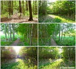 Forest trail - PHOTO STOCK PACK