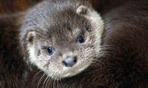 Silver-Otter's Profile Picture