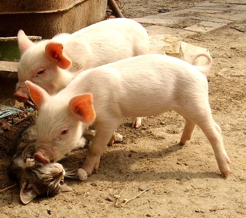 [Bild: animals_by_onlyphoto.jpg]
