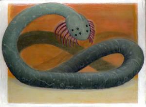 australian sandworm