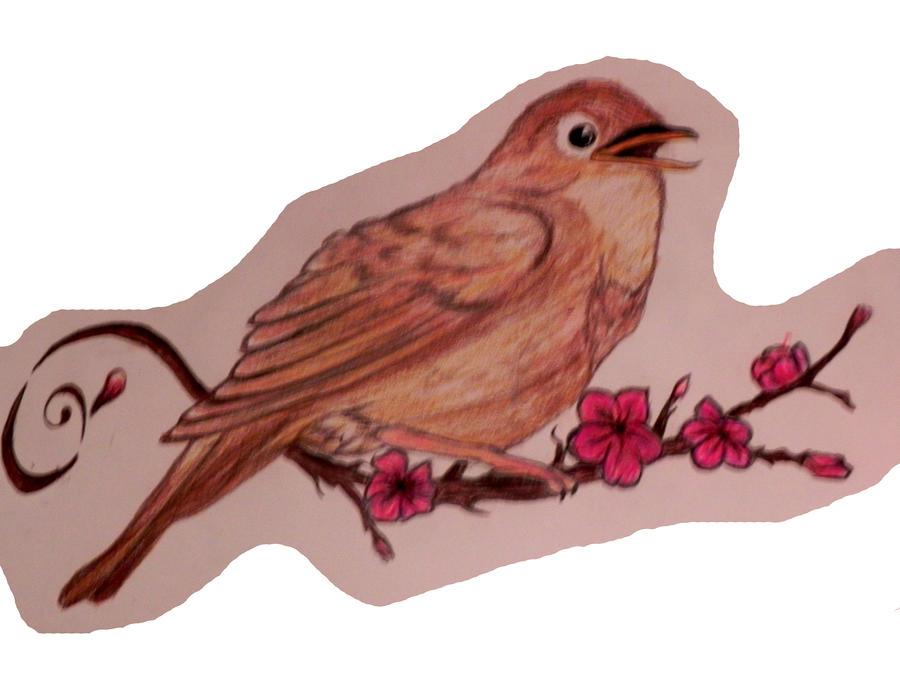 Nightingale By Coltonowen11 On Deviantart