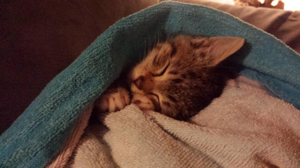 sleeping kitten by ENGELSEINEFRAU