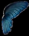 Wingsblue