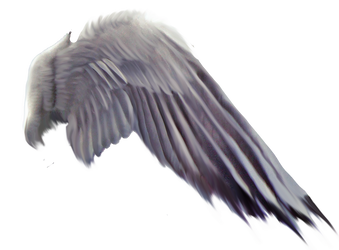 FREE PNG Purplewings