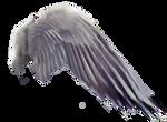 FREE PNG Purplewings