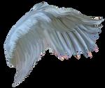FREE wings2016BH