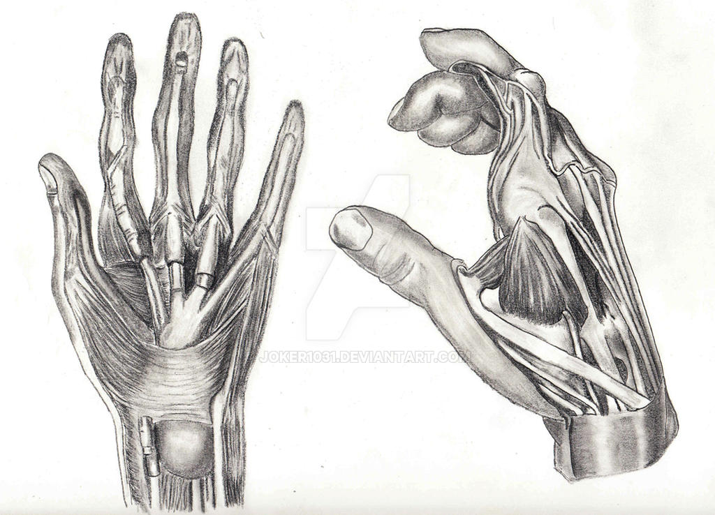 W4a1 Hands Muscles By Joker1031 On Deviantart