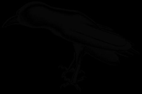Raven by Kurich