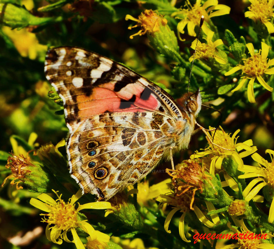 Butterfly Close Up by queenmariann
