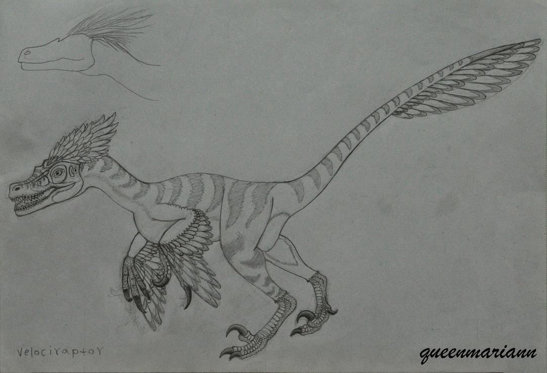 Velociraptor Mongoliensis by queenmariann