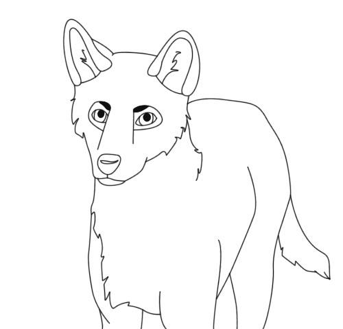 how to draw a dingo head