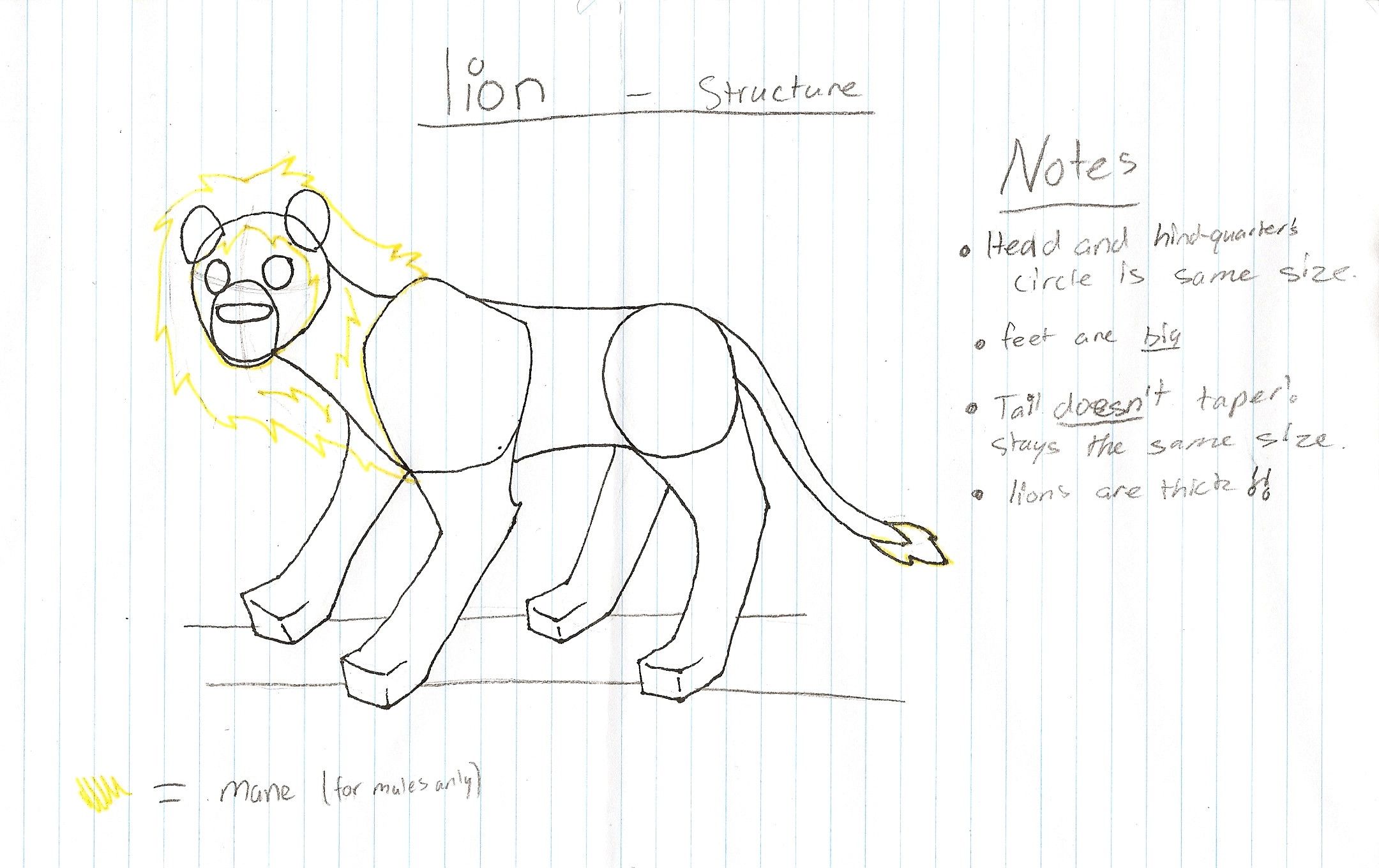lion_practice___structure_by_dog_rose.jpg