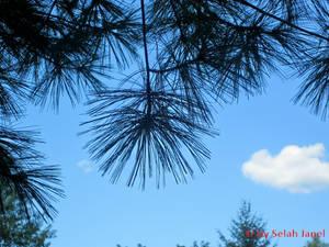 Tree Gazing, Variation 1