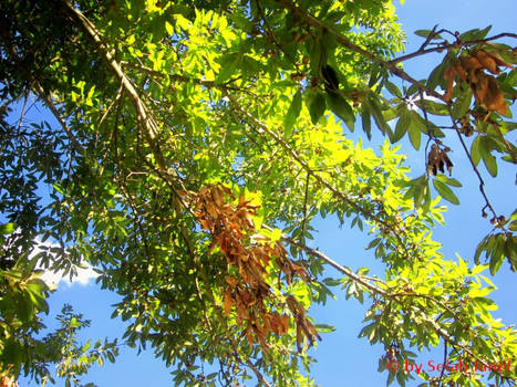 Tree Gazing, Variation 2