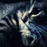 Tiger by timeisatraveller