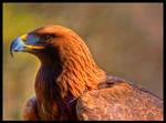 Eagle III by T0mcat6