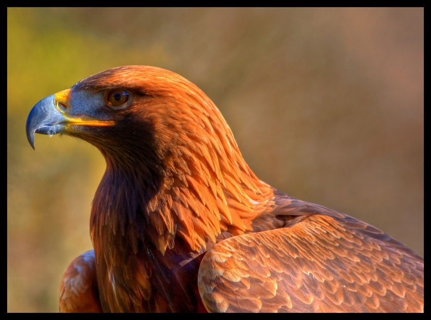 Eagle III by deoroller