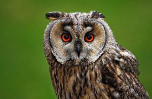 Owl_II by deoroller