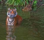 Tiger_III
