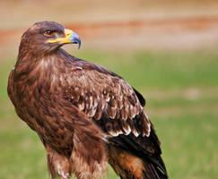 Eagle_XVIII by deoroller