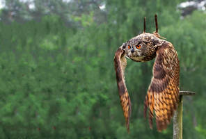 eagle_owl_V by deoroller