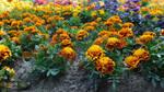 Flowerpower (3) by drackendarck
