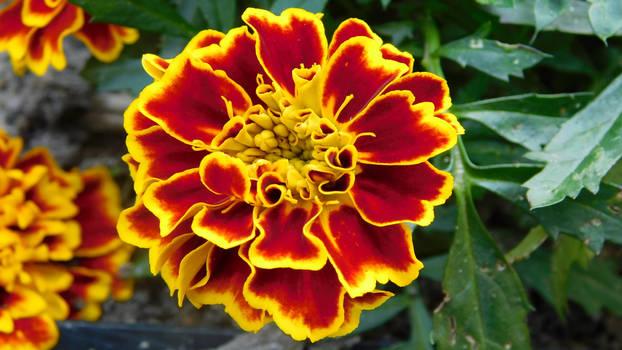 Flowerpower (4)