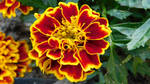 Flowerpower (4) by drackendarck