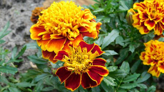 Flowerpower (5)