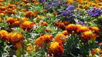 Flowerpower (6) by drackendarck
